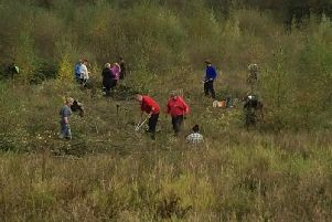 Volunteers working on the fen coppicing willow during the volunteers' day.