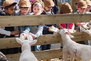 There's lots to do down on the farm with Lambing Live at Mrs Dowsons