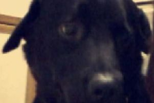 Thunder, a Labrador Collie cross, died after being abandoned by his owners.