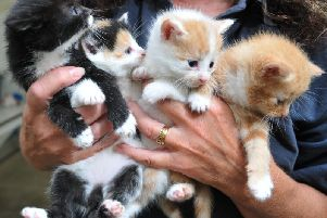 These four kittens were abandoned outside the RSPCA in Preston with their mother in 2016
