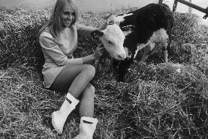 Diane Gillmore with a one-week-old Hereford calf at the 1969 Royal Lancashire Show