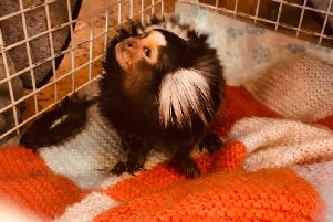 RSPCA officers discovered this marmoset monkey being kept in a birdcage in an East Lancashire house