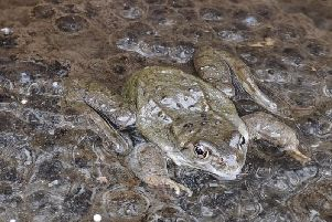 One readers Blackpool garden was plagued by frogs when his wife, who hated them, was alive. After she died, the frogs disappeared