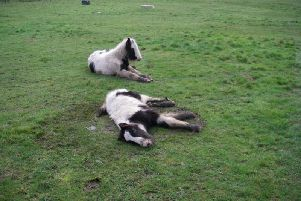 Horse dies after being dumped along with second colt in Leeds