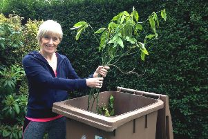 More homes in North Tyneside will be getting a garden waste bin.