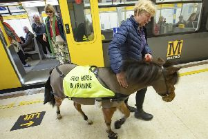 Digby, a guide horse, in training on the Tyne and Wear Metro. Picture by Steve Brock.