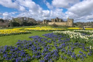 Spring flowers beside Alnwick Castle pictured by Jane Coltman