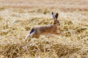 March Hare, taken by Jane Shipley, was declared the winner of the Fangfoss photography competition.