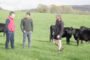 The team at Warrendale Wagyu is supplying the beef for more than 36,000 packs of Specially Selected British Wagyu Burgers to Aldi stores.