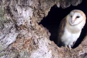 Wildlife caught on camera at decaying tree