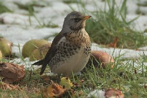 A total of 25 red-listed species were recorded, with five appearing in the 25 most commonly seen species list. These include fieldfares, starlings, house sparrows, song thrushes and yellowhammers.