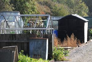 Nine top tips for keeping your allotment ship shape this winter