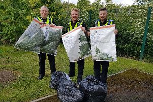Officers from Pontefract Neighbourhood Policing Team seized the plants. Photo: West Yorkshire Police.
