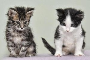 Bert and Ernie have a rare genetic condition called Syndactylism, which means their claws are fused together. Pictures: Julian Brown