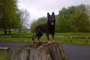 Notts police dog Loki has died