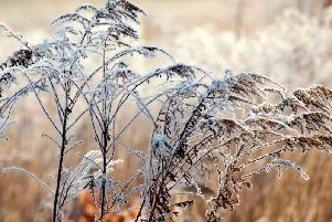 Its chilly out there this morning.