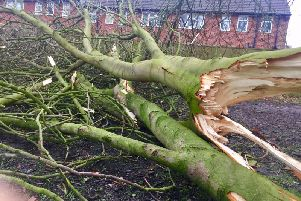 In the wake of Storm Erik - An uprooted tree on Belmont Field in Starbeck, Harrogate. (Picture by Stuart Rhodes)