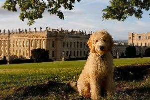 Faithful Friends to Treasured Companions: The Many Lives of Dogs Are Celebrated at Chatsworth