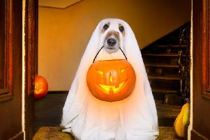 Woof! Fancy a new outfit for your dog this Halloween?