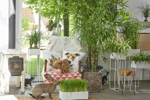Live in peace with your pets and plants. Picture: www.thejoyofplants.co.uk