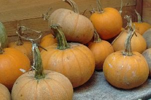 Pumpkin Winter Luxury. Picture by Real Seeds