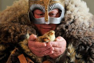 'Viking' Kevin Watts with the rare chicks which will become part of the story at Kynren, the spectacular live action show telling the story of 2,000 years of English history. Pic: North News.