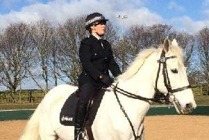 The longest serving police horse is preparing to hang up his horseshoes and enjoyretirement after 16 years service. Oakwell, whose stable name isGeorge, is the longest serving horse in the Mounted Section and will work his final shift on March 30, 2019.'