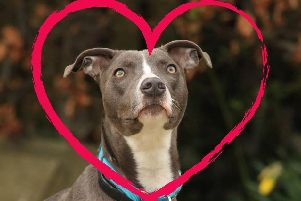 Newton is searching for love this Valentine's Day