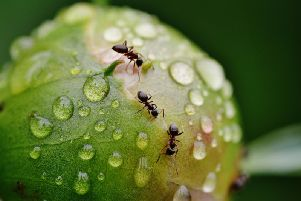 Ants can be a problem