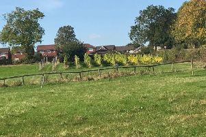 Amber Valley Wines vineyard