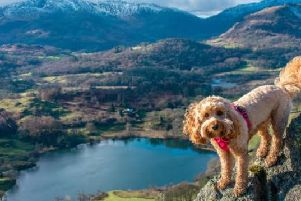 Last year's Canine Critic Poppy on holiday in the Lake District