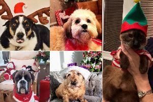 Some of your pet pictures for this year's Santa Paws.
