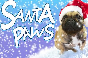 Vote now for your favourite Santa Paws picture.