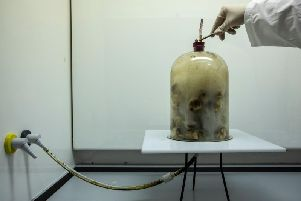 Experiment to show the dangers of smoking.