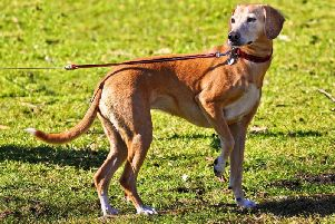 Do you think dogs should be kept on leads at all times in public places?