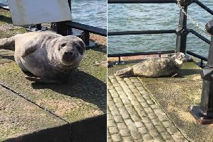 Karen Brookes spotted the seal in Roker.