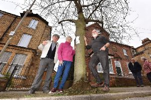 Ray Springall, Audrey Wood and John Hobson stand firm against North Yorkshire County Council's plans to remove trees on Westbourne Park.