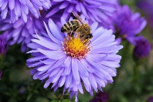 Making your garden more bee friendly is certain to make it bloom