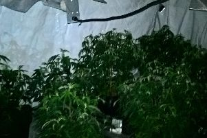 A cannabis farm was found in a house in Barnsley this morning
