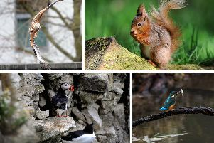 How many of these rare species have you seen in Yorkshire?