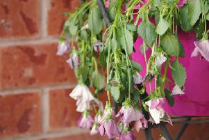 How to take care of your plants and flowers during a heatwave