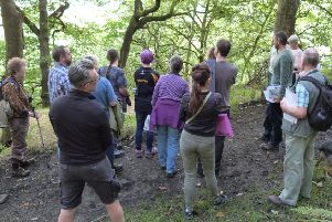 Park walk: A previous stroll in Centre Vale woodland.