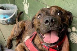CURTIS: Hes already waited too long for his forever home. Come and meet him, he wont disappoint you. 0113 2536952