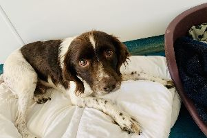 TYLER: Can be a tad shy first off but a loving chap with lots to give, loves his comforts and treats.