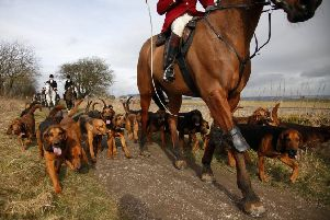 Theresa May supports return of fox hunting: What do you think? Have your say