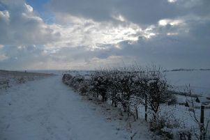 Snow in Scarborough. Picture by Humble Bee Farm/@humblebeefarm.