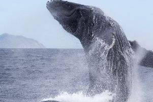 Humpback whales spotted off Yorkshire coast for the first time since 2014 thanks to clear weather