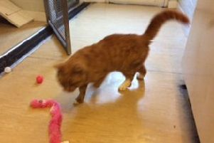 Can you find a home for Garfield?