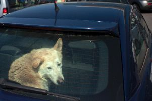 Tesla's Dog Mode was made available this week