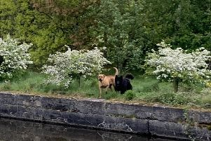 People are worried about aggressive dogs prowling the towpath near Pearsons Flash